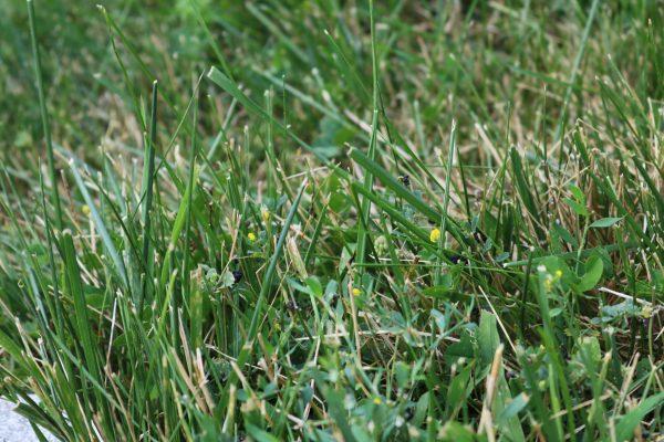 Flowers in Lawn