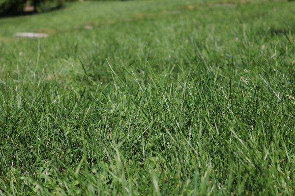 Organic Lawn